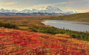 аляска, природа, реки, озера, вид, пейзаж, горы, снег, цветы, долина, красота