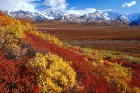 аляска, природа, пейзажи, вид, пейзаж, горы, снег, цветы, долина, красота