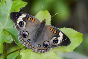 бакай, животные, бабочки,  мотыльки,  моли, бабочка, чешуекрылые, насекомые
