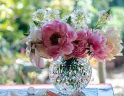 ваза, букет, пионы, лепестки
