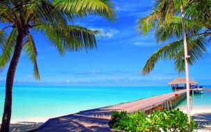 природа, тропики, море, пляж, пальмы
