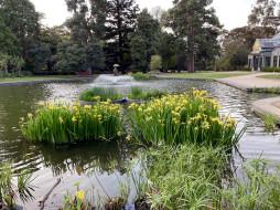 природа, парк, водоем, фонтан, ирисы