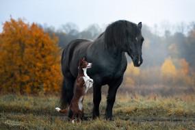животные, разные вместе, наталия, поникарова