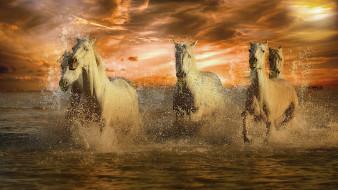 животные, лошади, белые, брызги, море, закат