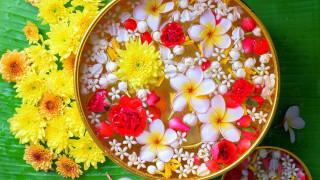 хризантемы, плюмерия