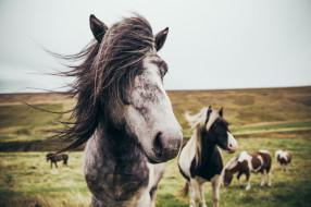 животные, лошади, табун, луга