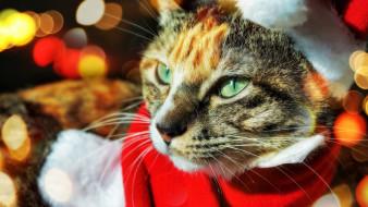 животные, коты, кот, мороз, санта