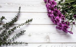 лиловые, хризантемы