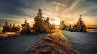 заснеженные деревья, зимний ландшафте, восход солнца