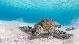 животные, черепахи, морская, черепаха