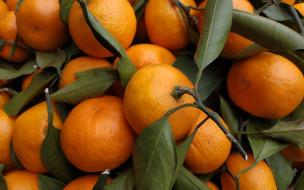 еда, цитрусы, мандарины
