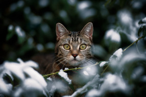 животные, коты, котейка