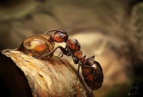 Eli Fabien обои для рабочего стола 1920x1299 eli fabien, животные, насекомые, муравей, painting, practice, eli, fabien