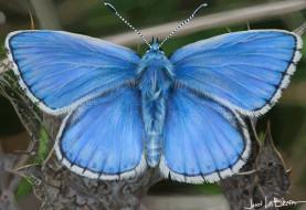 John LaBrada обои для рабочего стола 1920x1318 john labrada, рисованное, животные,  бабочки, blue, butterfly