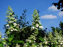 весна, небо, цветущий, куст