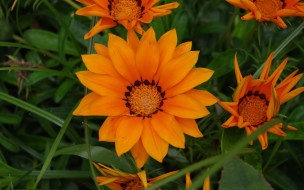 оранжевая, газания