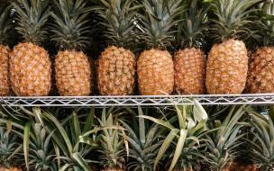 обои для рабочего стола 2560x1600 еда, ананас, экзотика