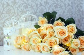 чайные, розы, много, бутоны