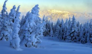 природа, лес, снег, зима, сугробы