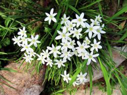 белые, цветочки