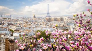 города, париж , франция, весна, панорама, башня, магнолия