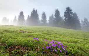 туман, луг, цветы