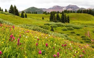 горы, луг, цветы, лето