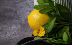 еда, цитрусы, лимон, мята