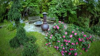 природа, парк, розовый, куст