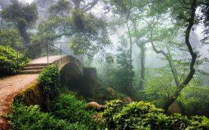 природа, парк, туман, мостик