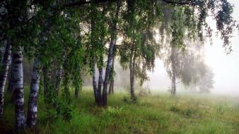 обои для рабочего стола 1920x1080 природа, лес, березы, туман