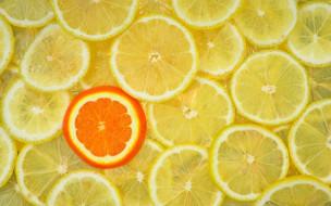 еда, цитрусы, лимоны