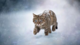 обои для рабочего стола 1920x1080 животные, коты, черно-коричневый, кот, снег, снегопад