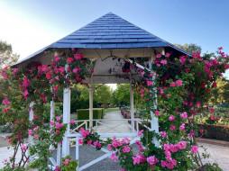 природа, парк, беседка, розы
