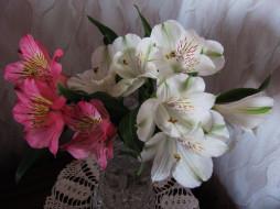 цветы, альстромерия, белая, розовая, букет