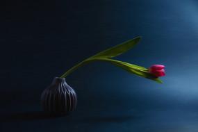 цветы, тюльпаны, ваза, тюльпан, одиночка, бутон