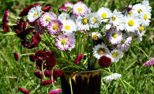 цветы, маргаритки, букет, разноцветные