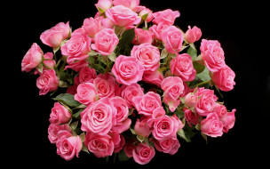 цветы, розы, розовые, бутоны, черный, фон