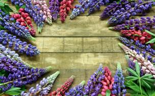 разноцветный, люпин