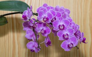 ветка, орхидеи, экзотика
