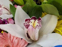 орхидея, макро