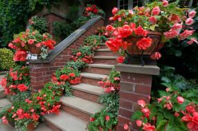 цветы, бегония, цветочные, горшки, ступени