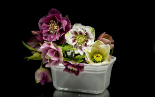 обои для рабочего стола 1920x1200 цветы, геллеборус , морозник, разноцветный, геллеборус, букет