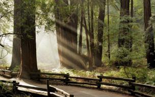 природа, лес, дорога, ограда, лучи