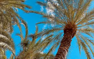 природа, деревья, пальма, тропики