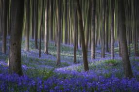 природа, лес, цветы, весна