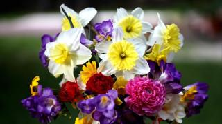 цветы, букеты,  композиции, букет, нарциссы, фрезии