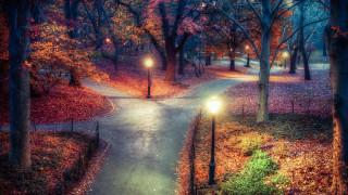 природа, парк, центральный, нью-йорк
