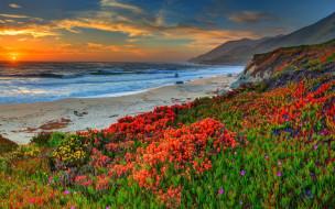 природа, побережье, берег, океан, песок, пляж, цветы, горы, камни, лишайник