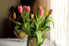 цветы, тюльпаны, букет, бутоны